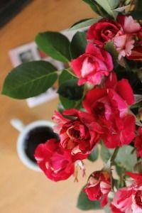 """Svit Kavy"""" cafe & roses"""